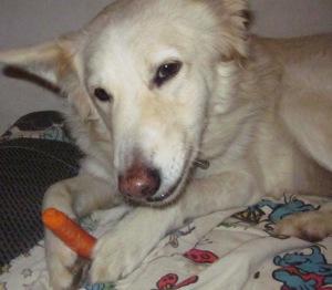 מוזמנות ומוזמנים לצפות בכפרה הכלבה שלי, שרה שיר הלל לטבעונות